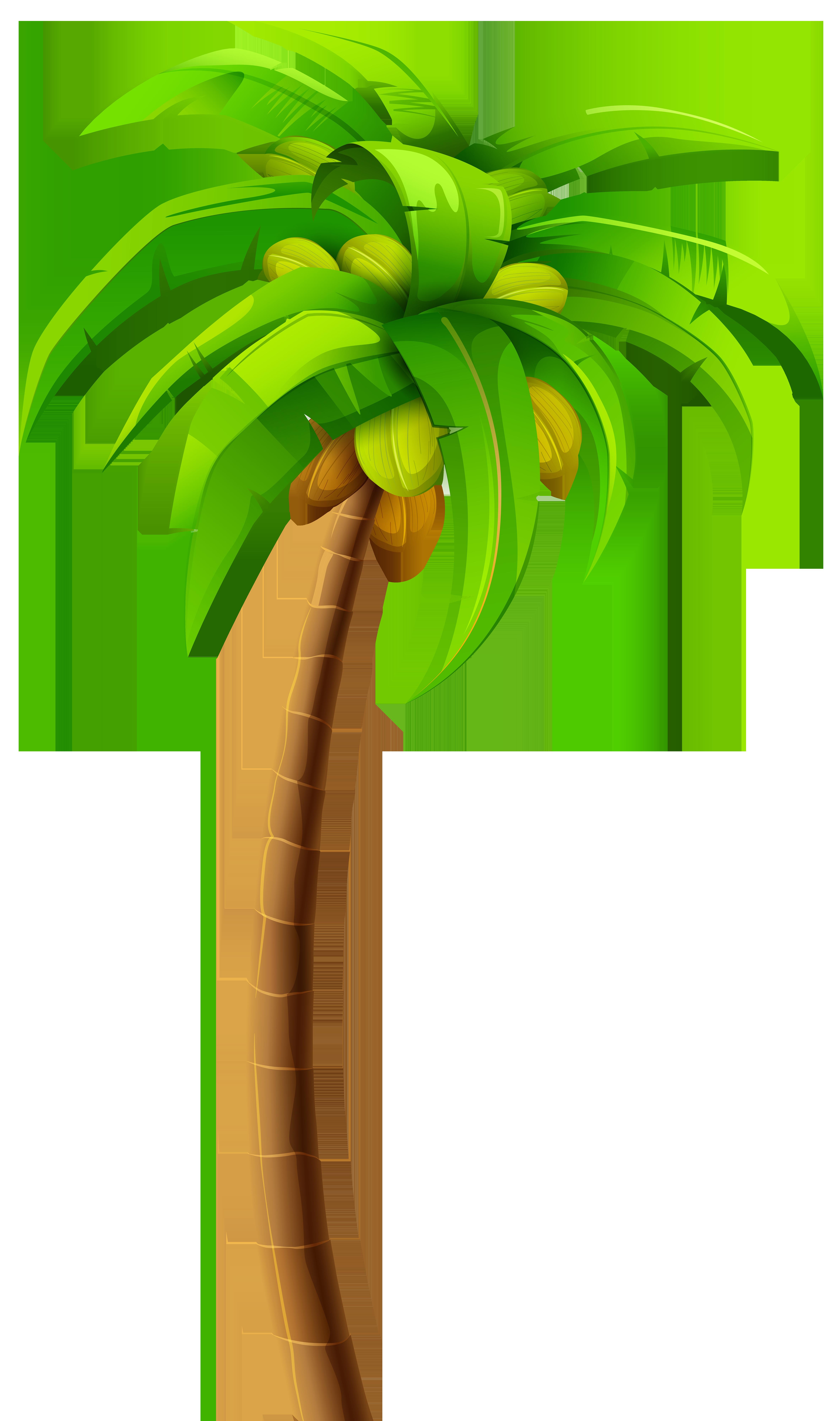 Palm PNG Clip Art.