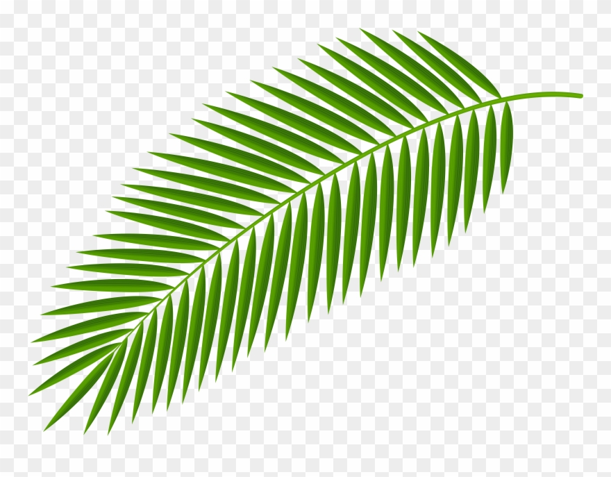 Leaves Clipart Palm Branch.