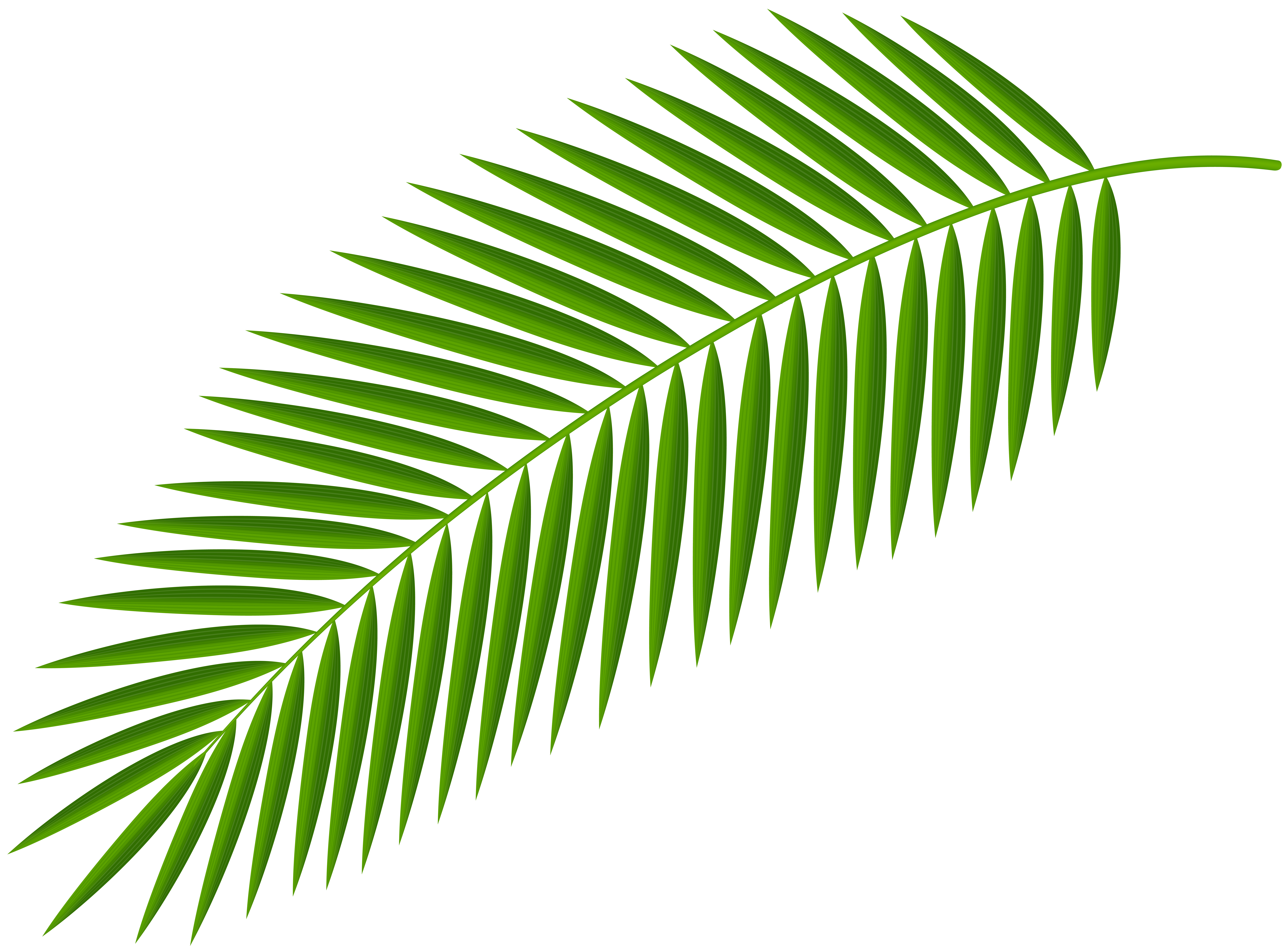 Palm Branch Transparent Clip Art Image.
