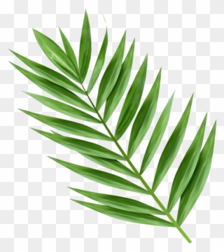 Free PNG Palm Branch Clip Art Download.