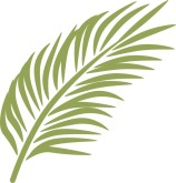 Palm leaves clipart #13