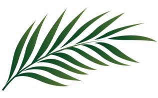 Similiar Palm Leaf Clip Art Keywords.