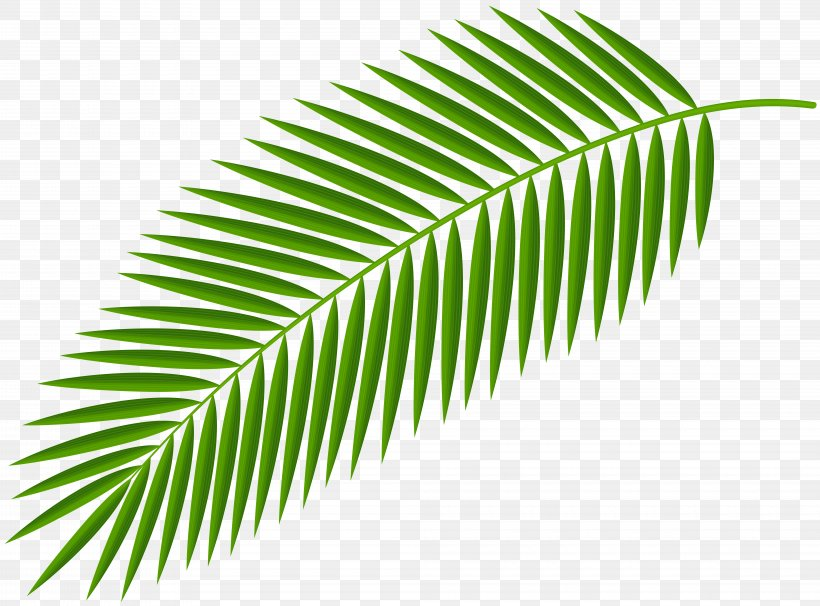 Palm Branch Clip Art Palm Trees Palm.