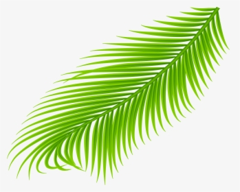 Palm Branch PNG Images, Free Transparent Palm Branch.