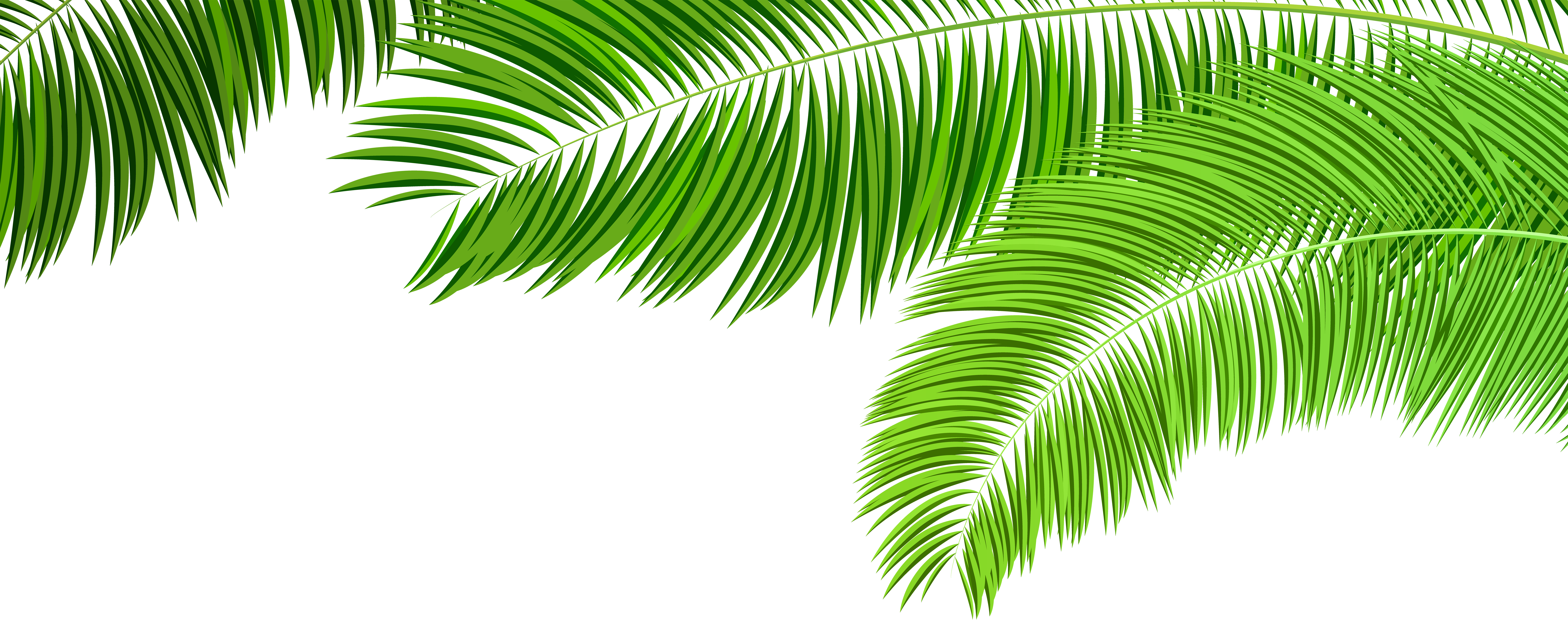 Palm Branches Decoration PNG Clip Art Image.