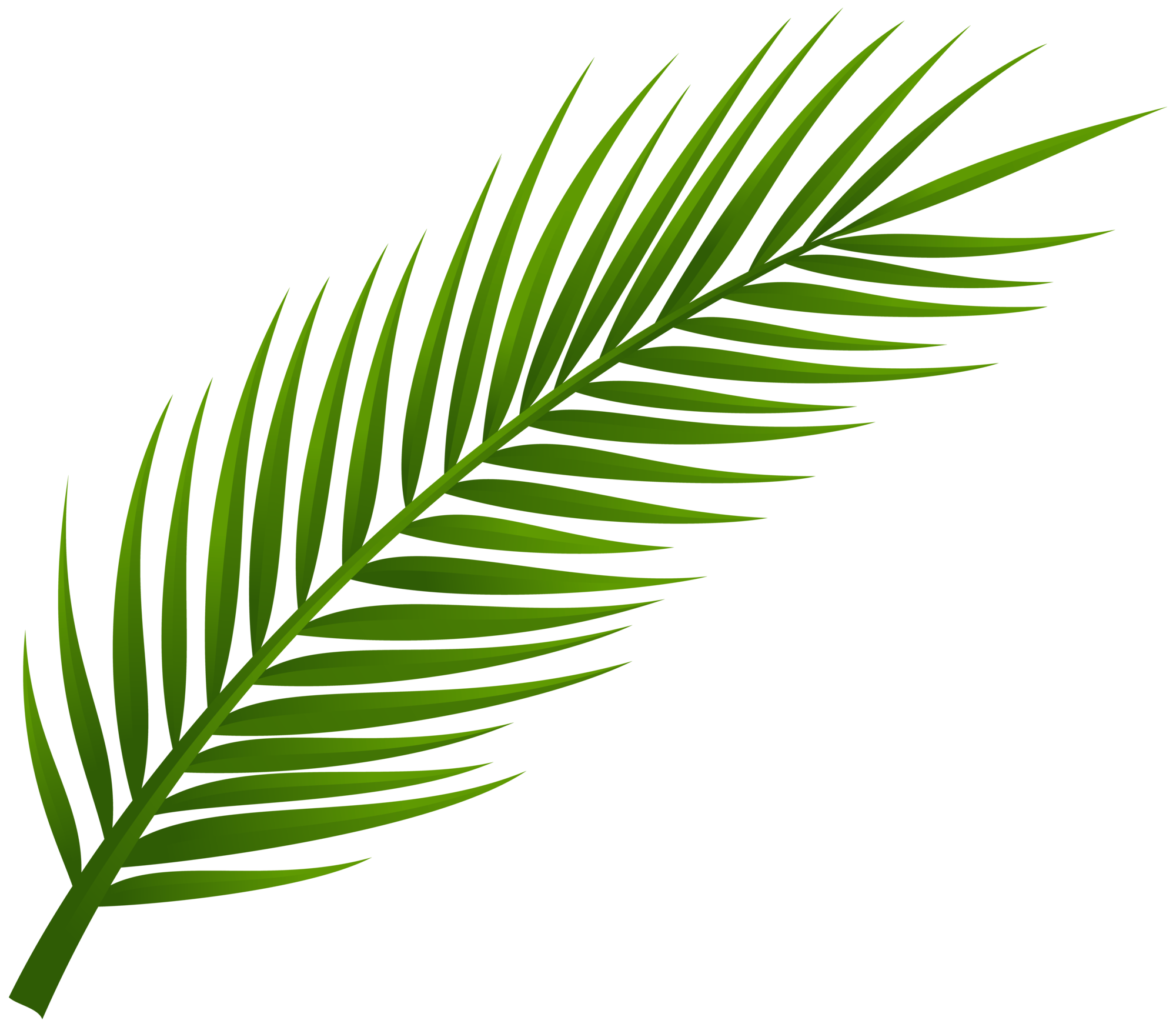 Palm Tree Leaf PNG Clip Art.