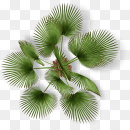 Palm Tree Plan PNG and Palm Tree Plan Transparent Clipart.
