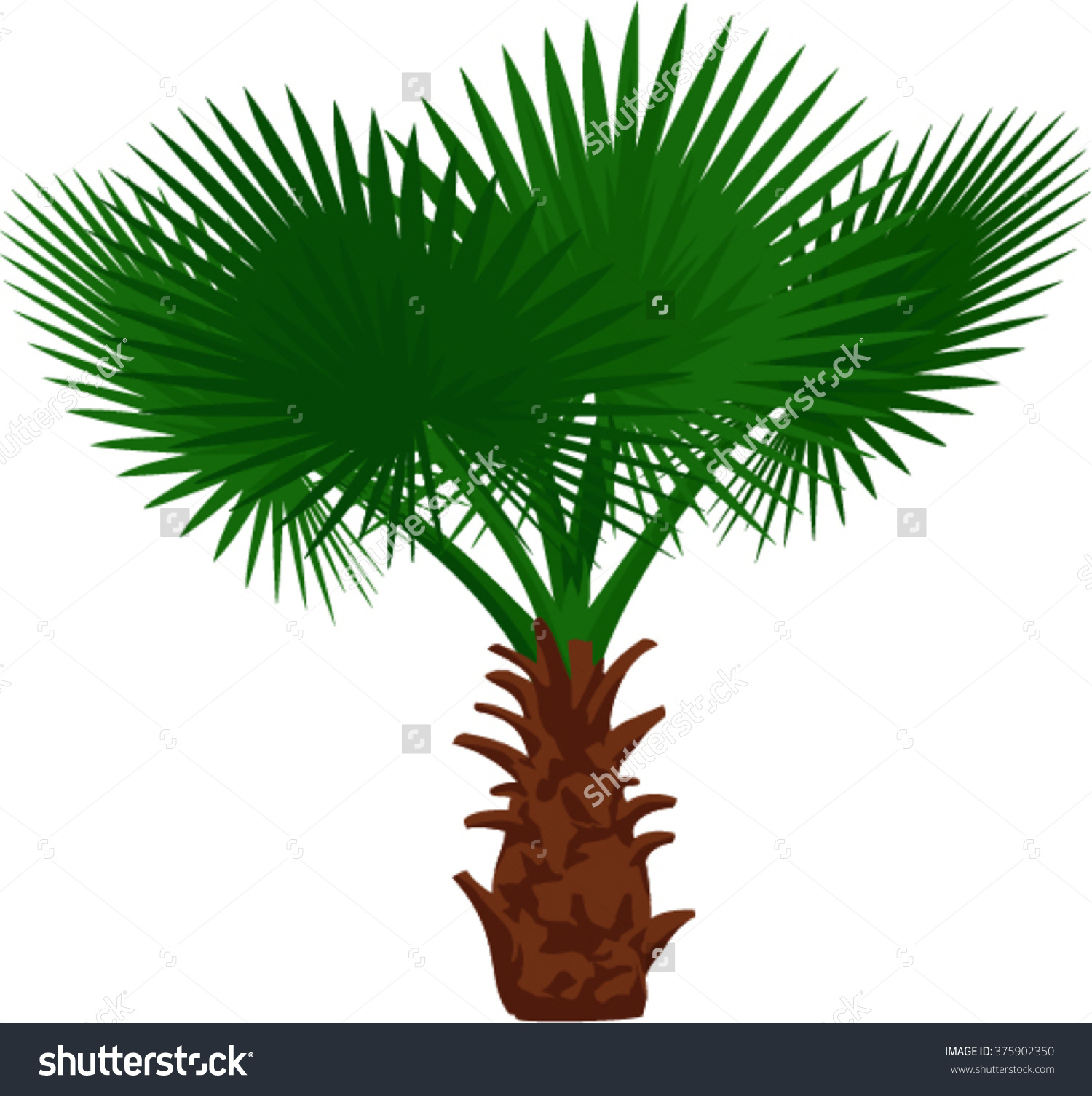Vector Mexican Fan Palm Tree Stock Vector 375902350.