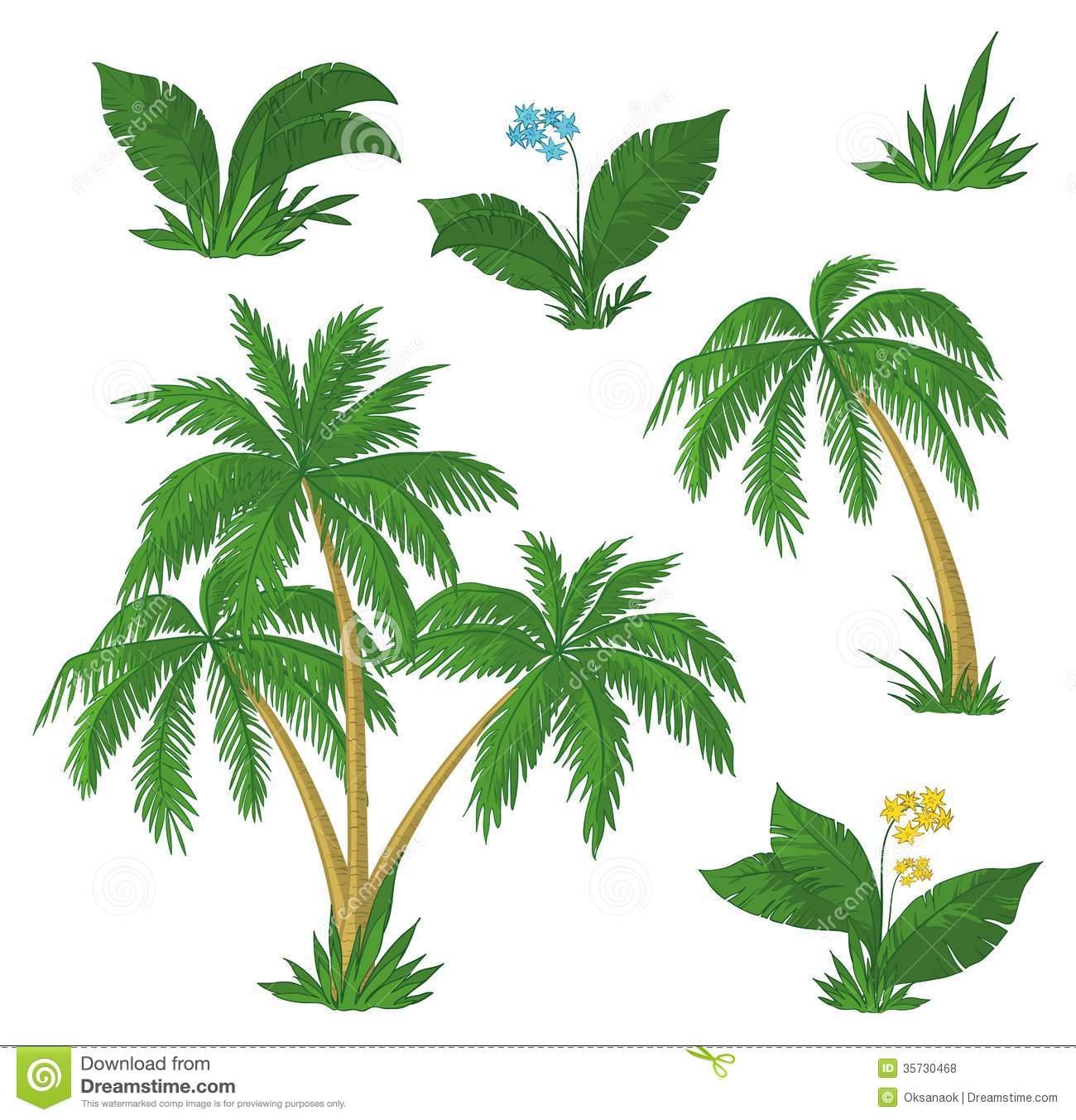 Palm grass clipart #3