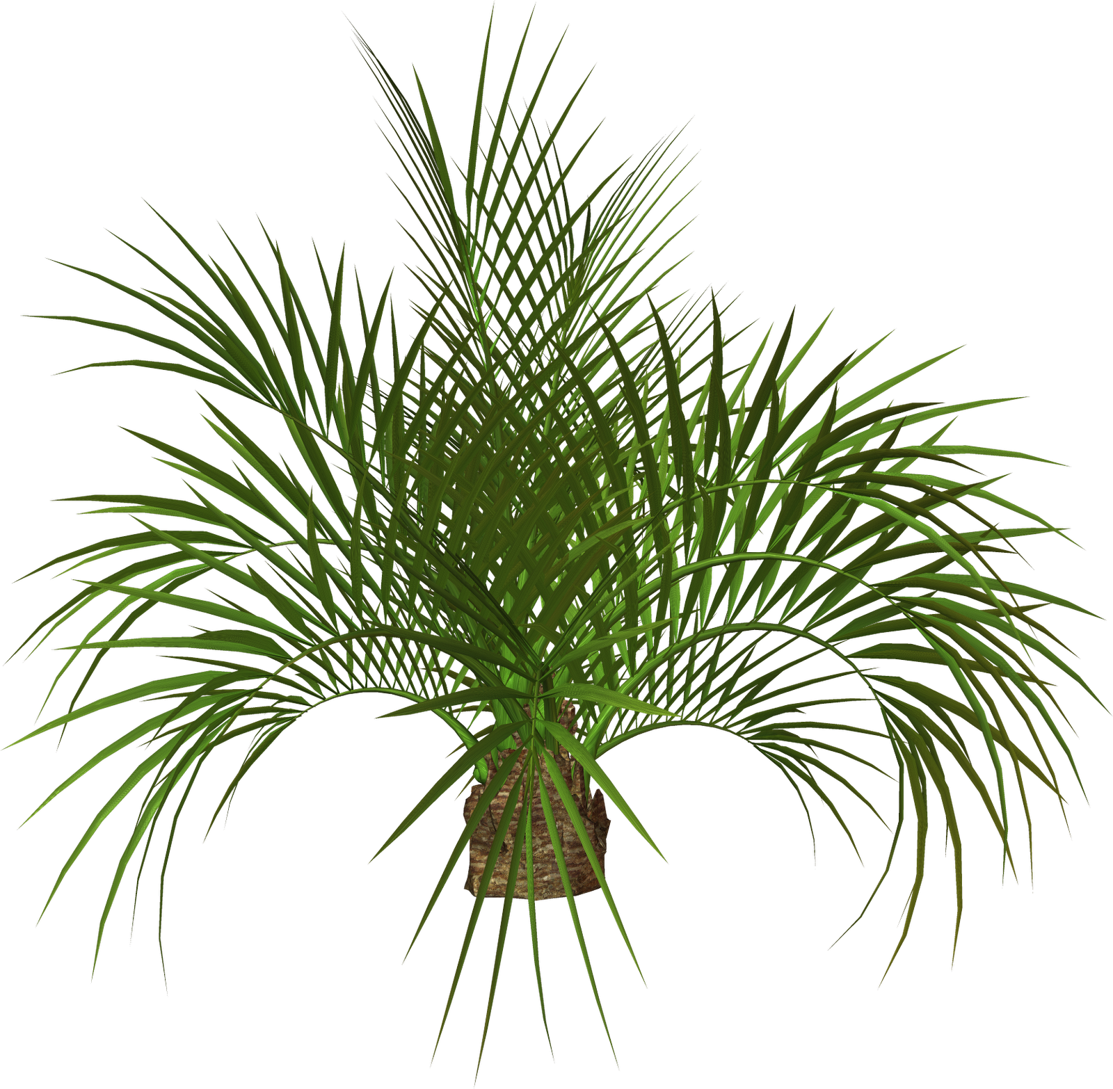 Palms Trees Flowers Clipart.