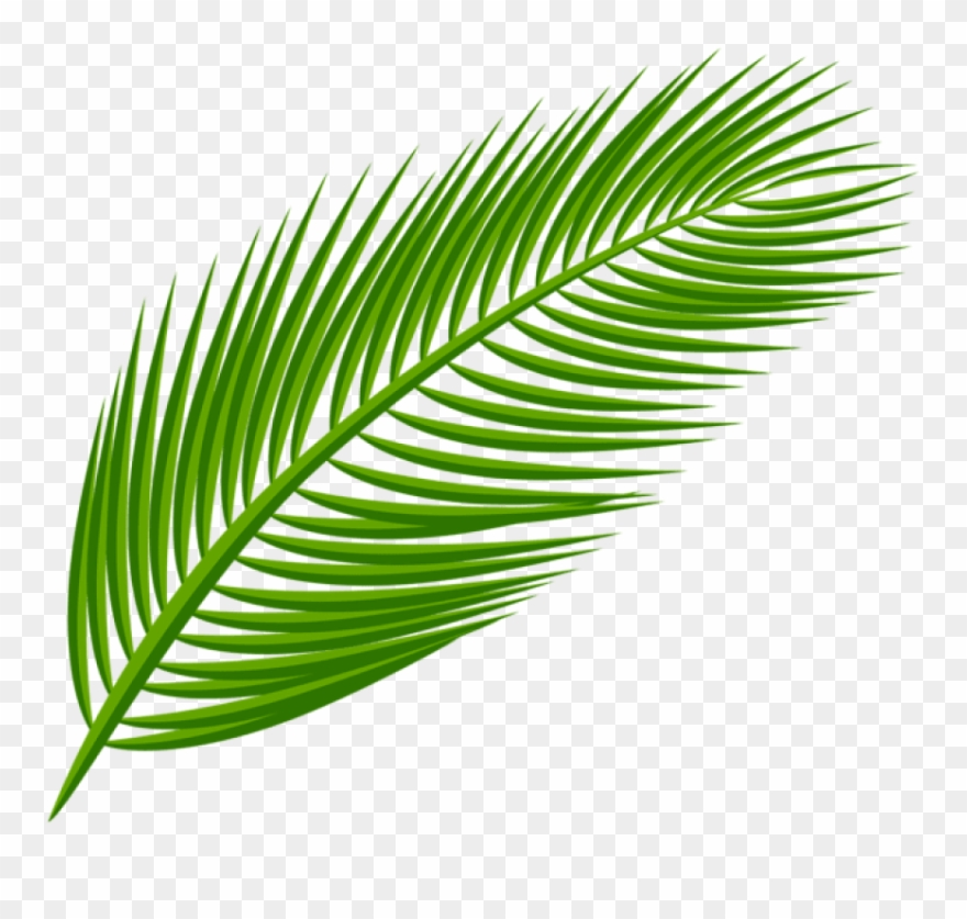 Download Palm Leaf Transparent Clipart Png Photo (#2319003.