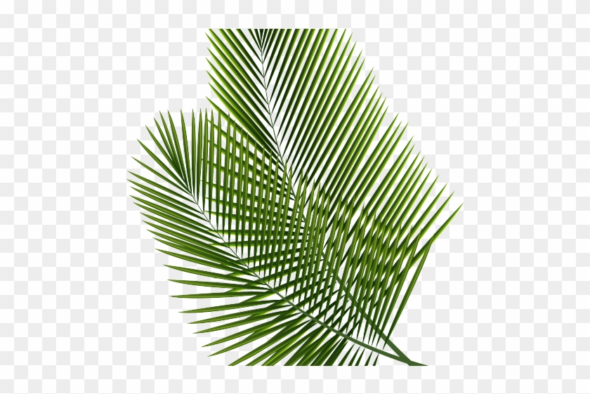 Tropical Clipart Palm Frond.