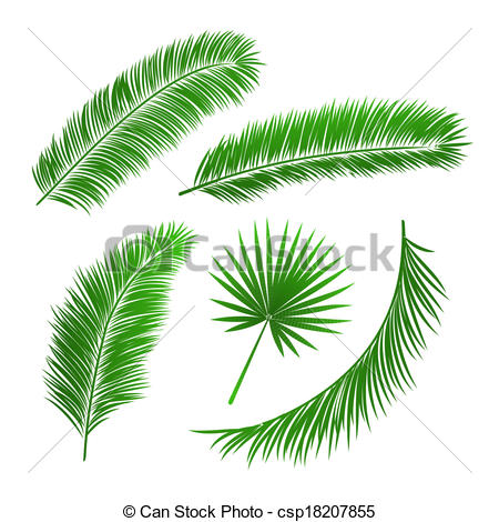 Palm frond palm leaf clipart #1