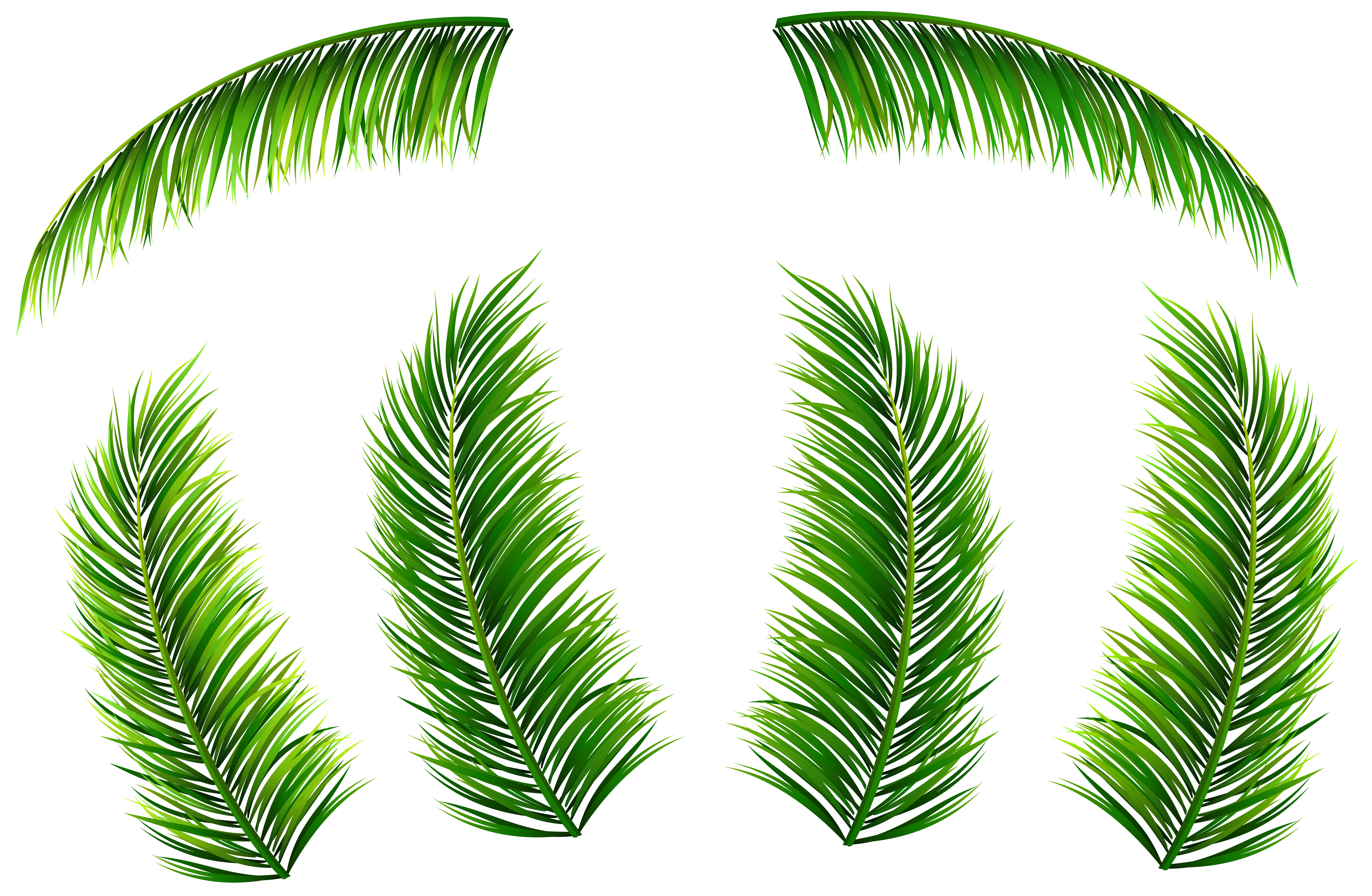 Palm Leaves PNG Clip Art Image.