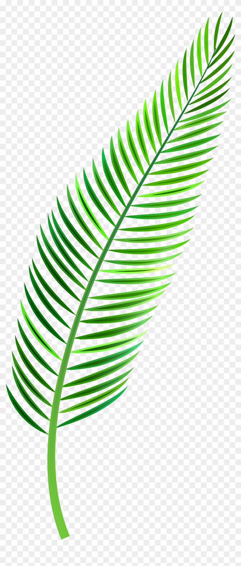 Palm Leaf Png Clip Art.