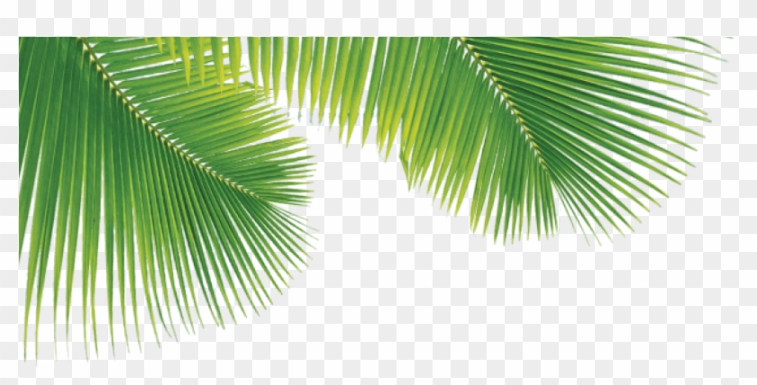 Png Palm Trees Leaves , Png Download.