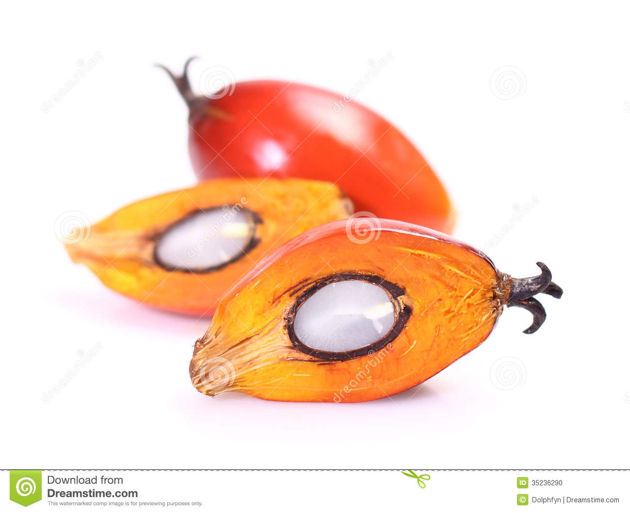 Oil Palm Fruit Stock Photo.