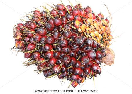 Palm fruit clipart #11
