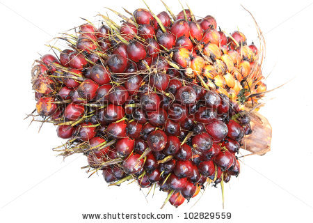 Palm Oil Fruit Stock Photos, Royalty.