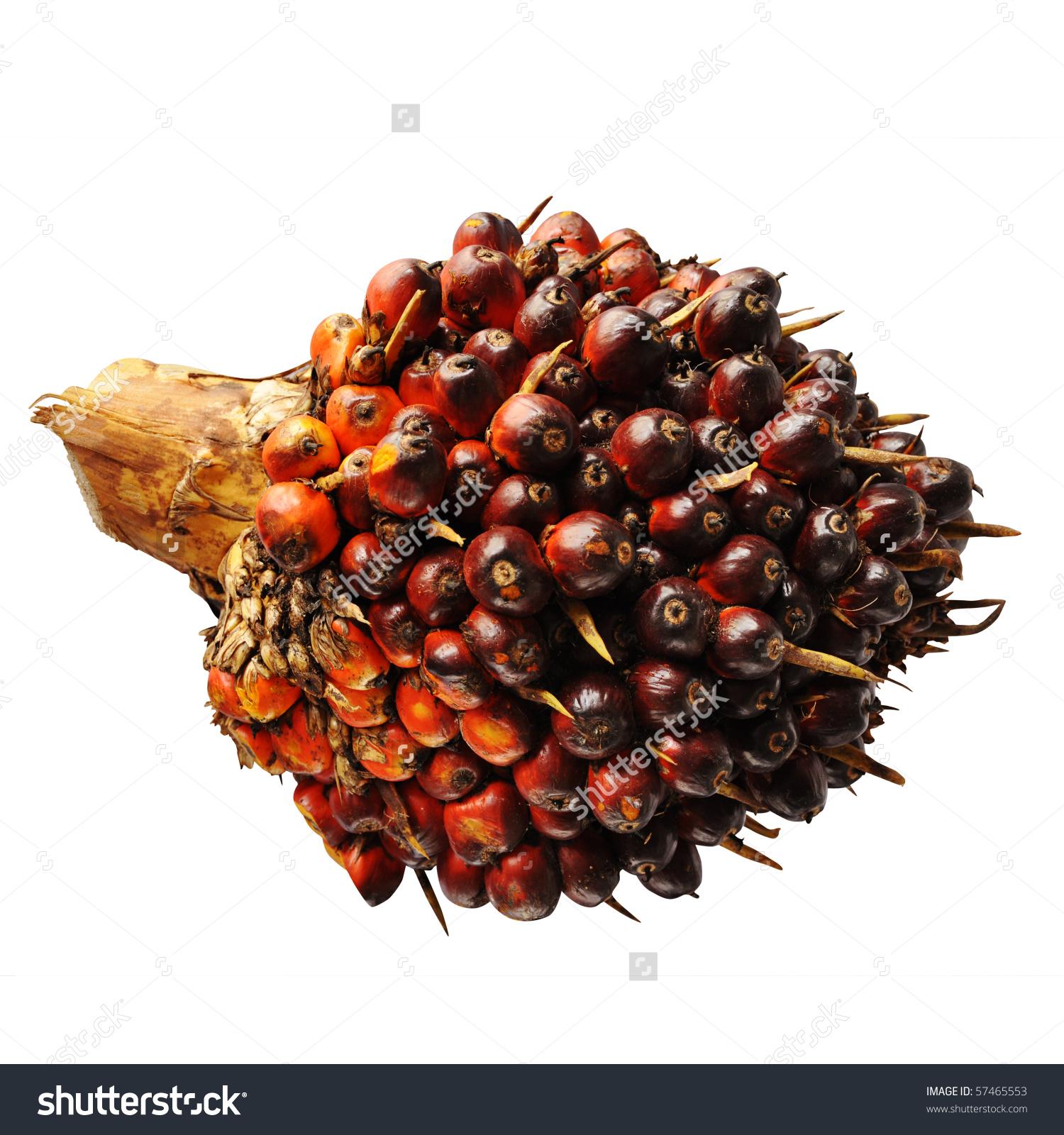 White Palm Oil.