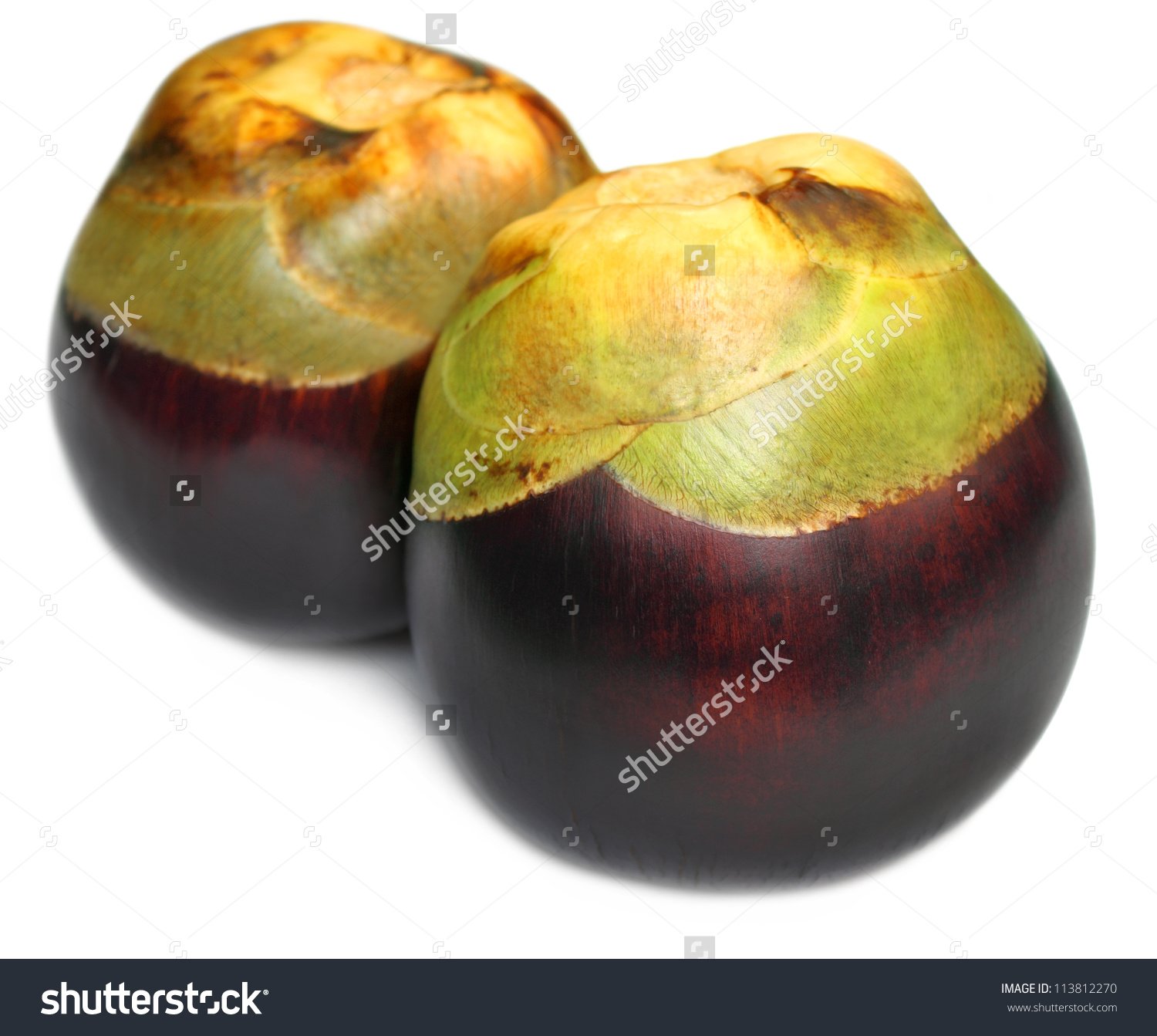 Borassus Flabellifer Tal Fruit Indian Subcontinent Stock Photo.