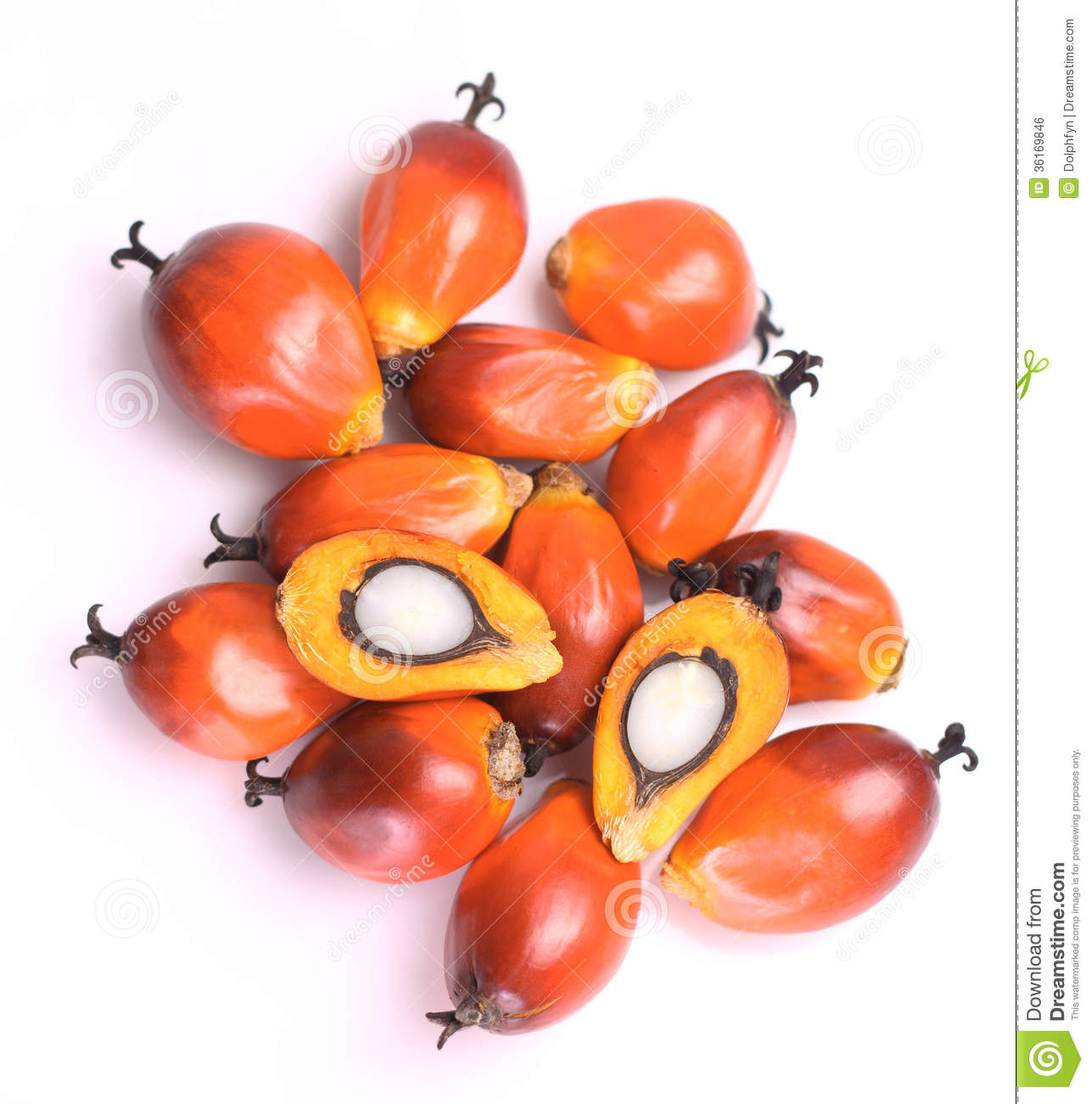 Oil Palm Fruit Royalty Free Stock Image.