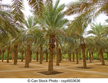 Stock Image of Palm garden in the Riyadh city, Saudi Arabia.