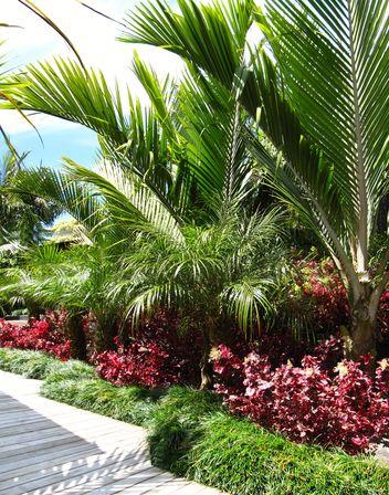 Palm garden clipart #11