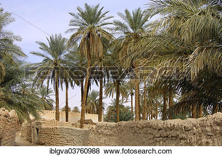 """Pictures of """"Palm garden in the oasis town of Ghadames, UNESCO."""