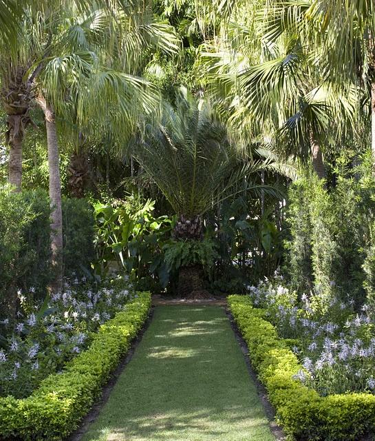 Palm garden clipart #2
