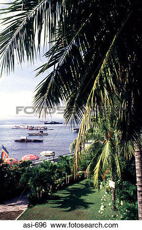 Stock Images of Palm Garden Zamboanga The Philippines Asia asi.