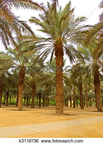 Stock Images of Palm garden k3118736.