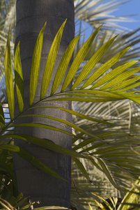 Palm Branch Clipart Image.