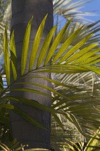 Palm garden clipart #17