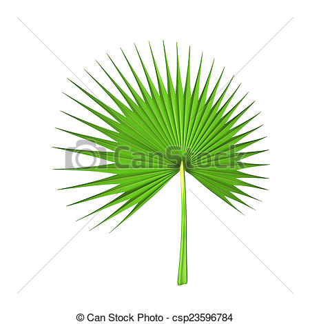 Palm genus clipart #16