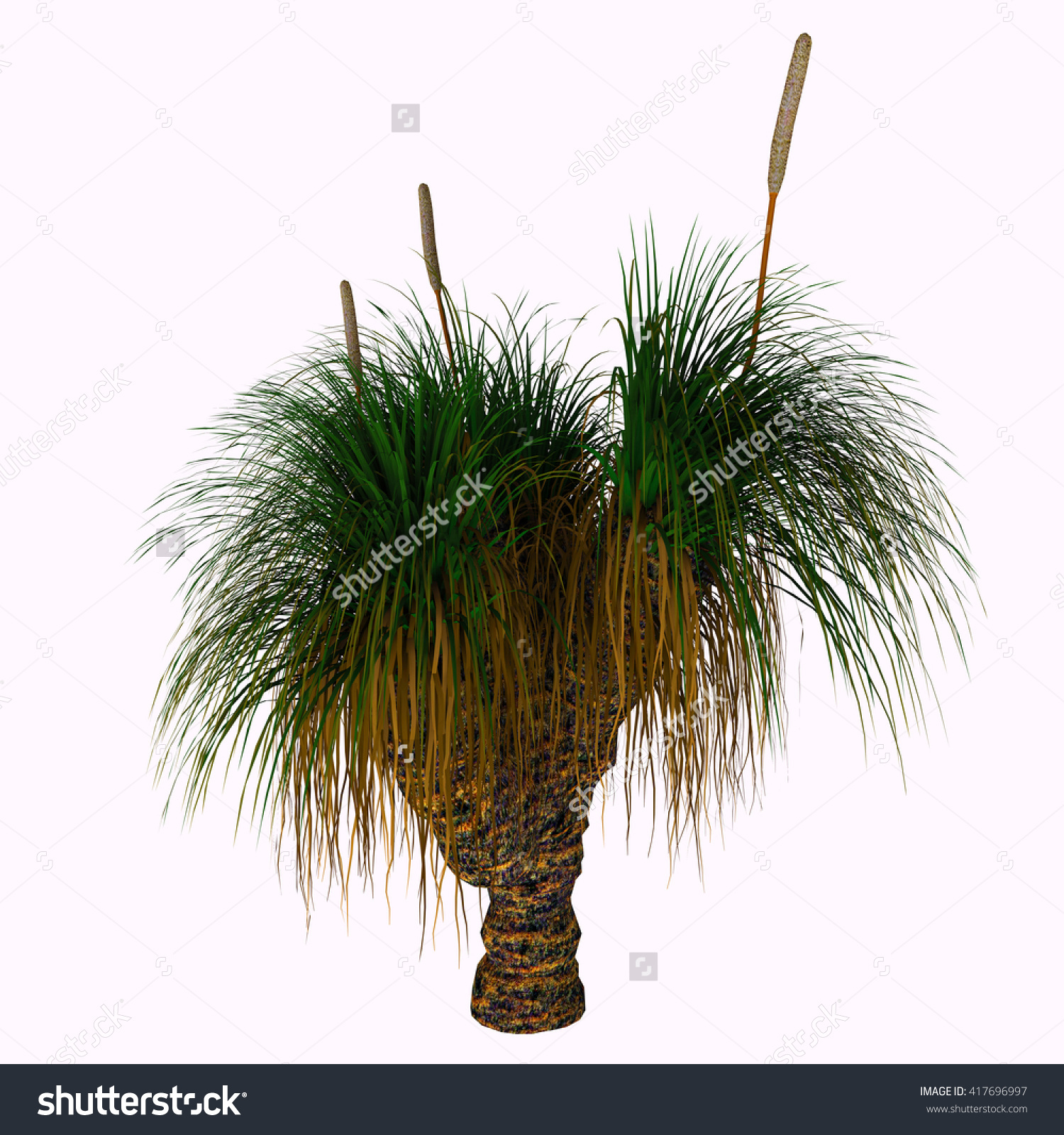 Xanthorrhoea Australis Tree 3d Illustration Xanthorrhoea Stock.