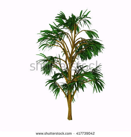 Gymnosperm Stock Images, Royalty.