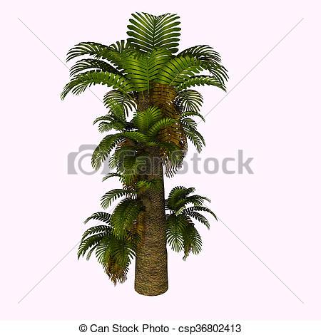 Clipart of Zamites Tree.