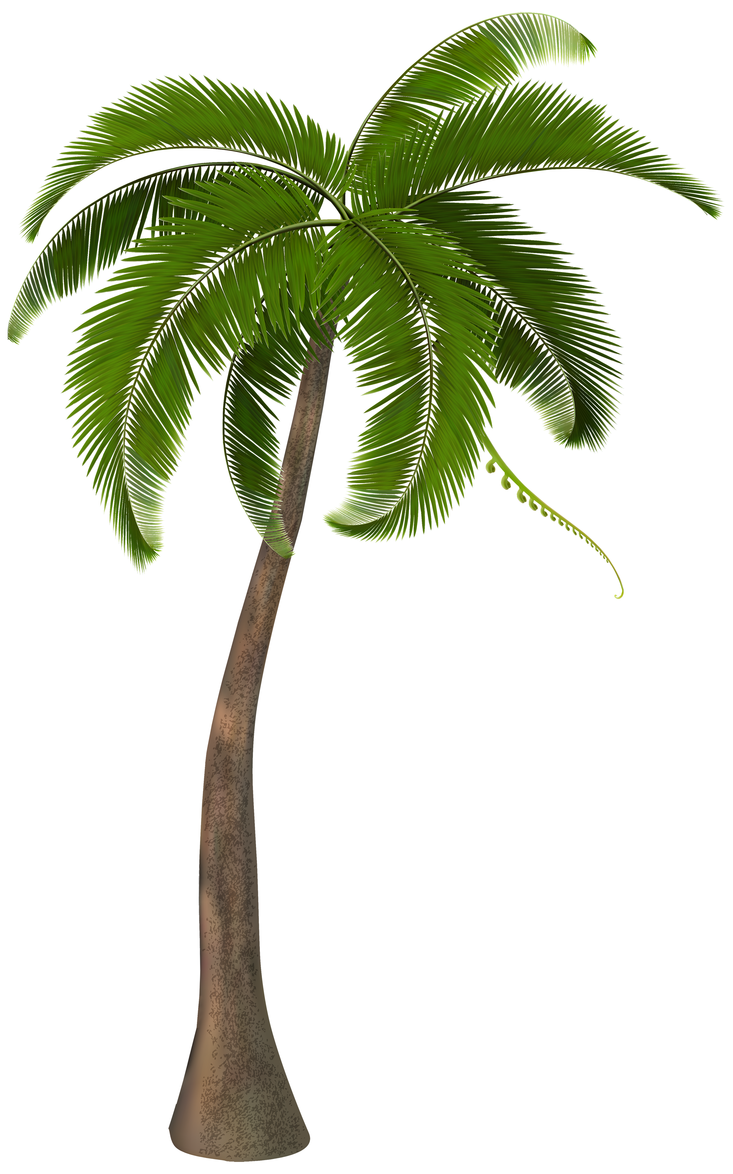 Palm genus clipart #8