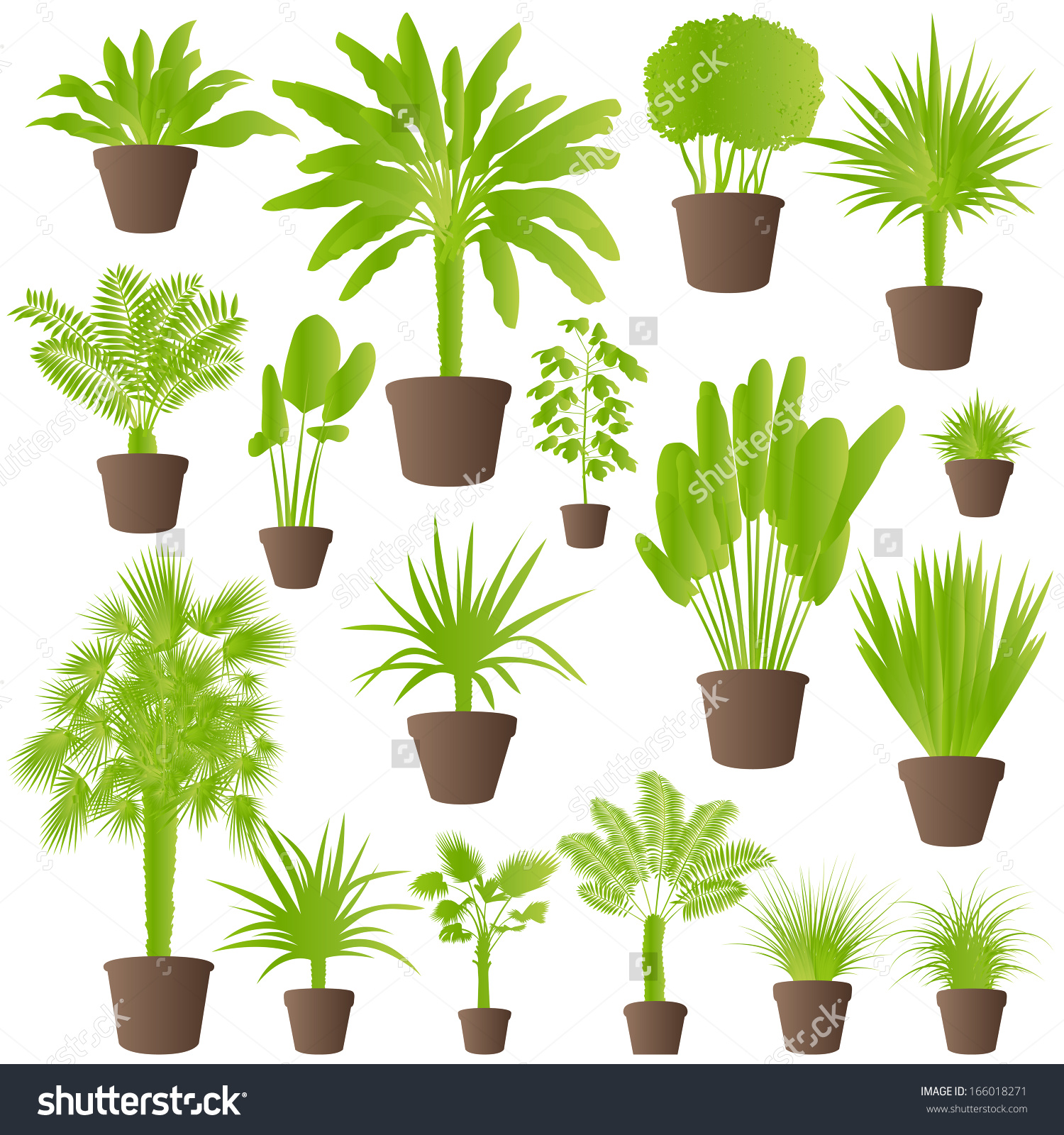 Exotic Jungle Bushes Grass Reed Palm Stock Vector 166018271.