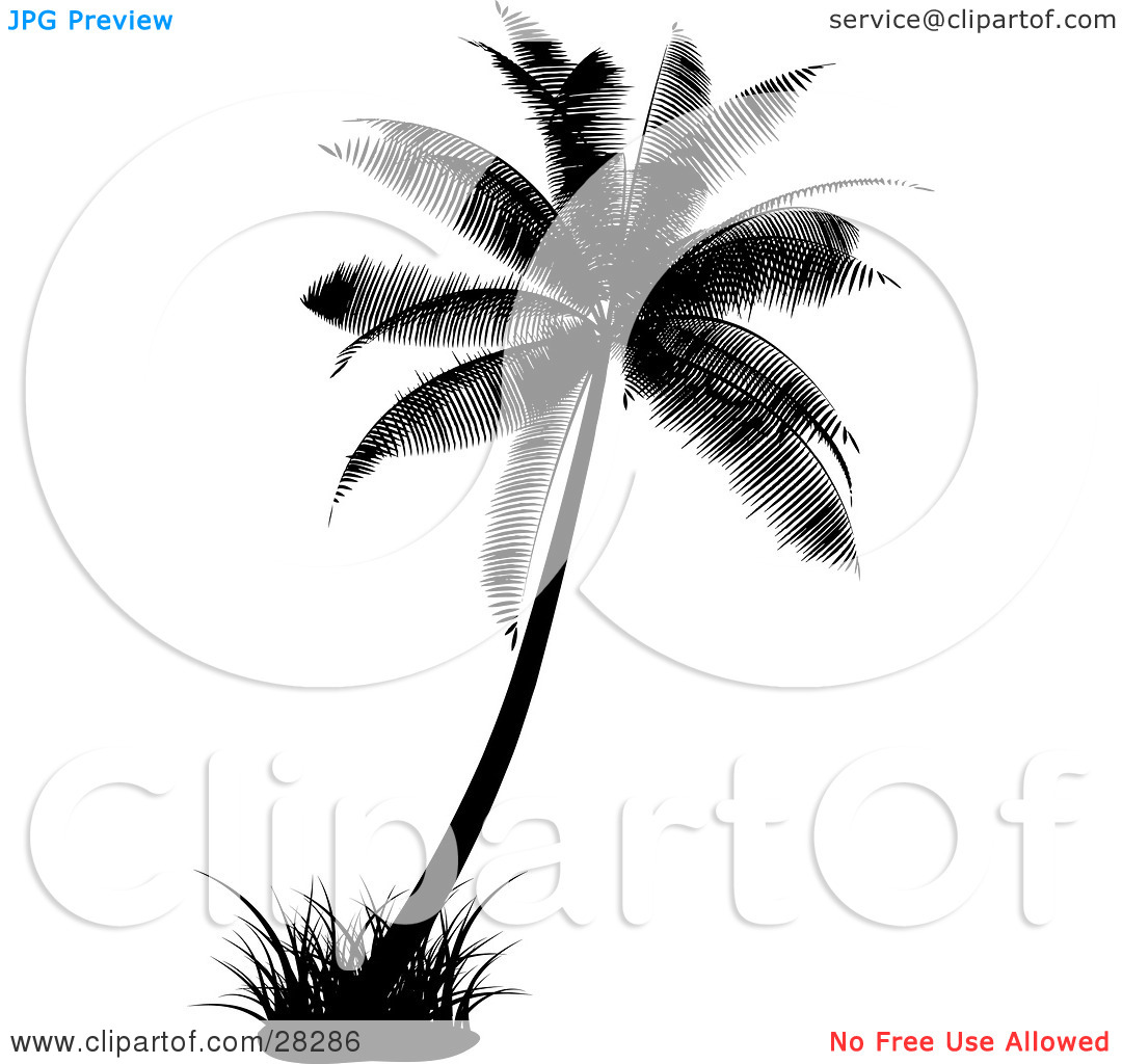 Clipart Illustration of a Black Silhouetted Palm Tree With A Tuft.