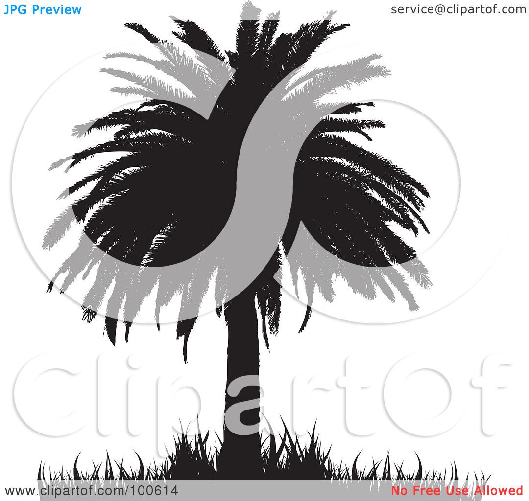 Palm grass clipart #6