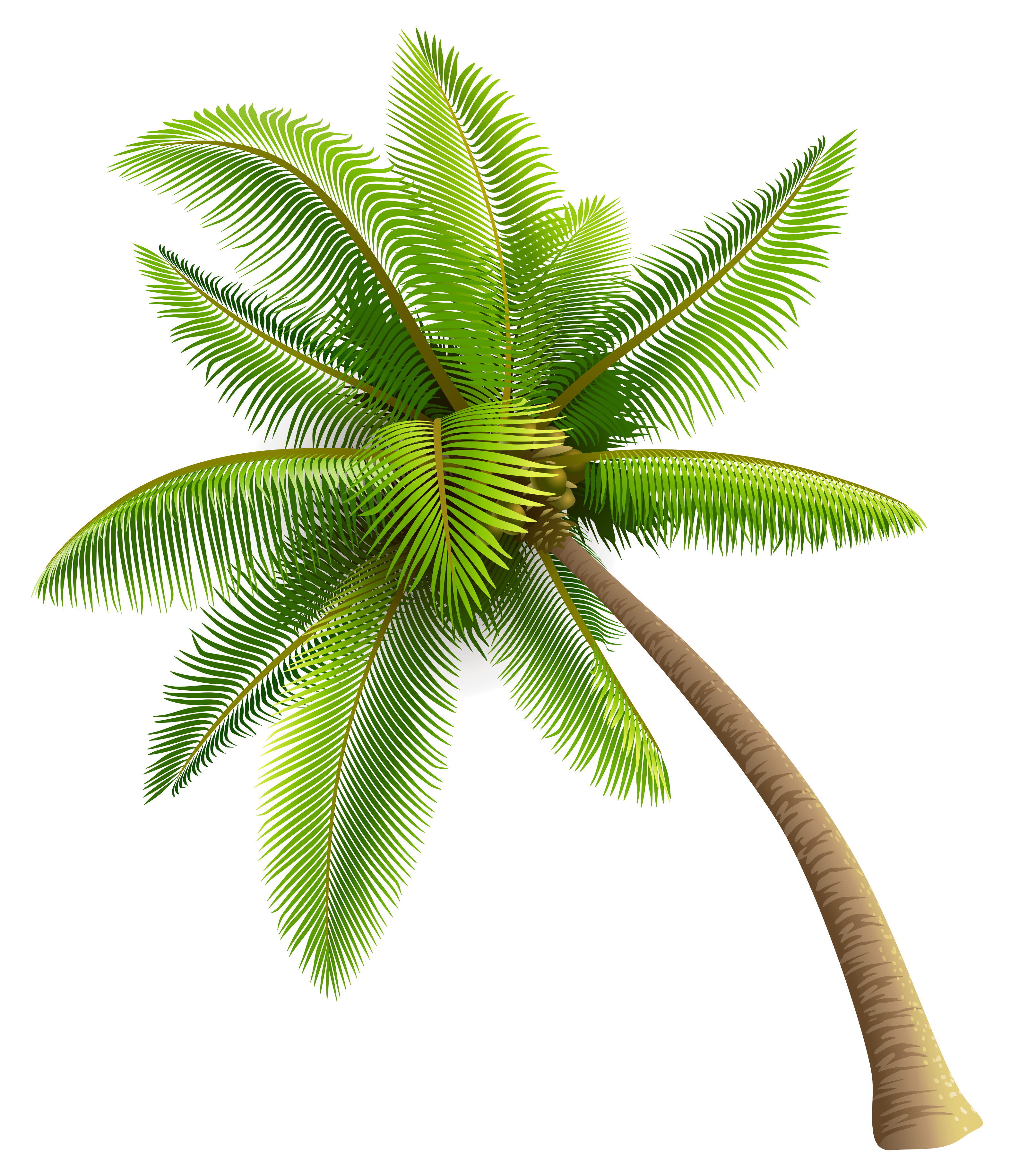 Palm green clipart #11