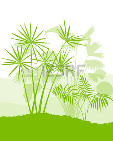 28,214 Palm Green Stock Vector Illustration And Royalty Free Palm.