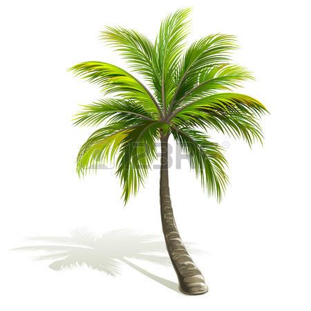 Palm green clipart #3
