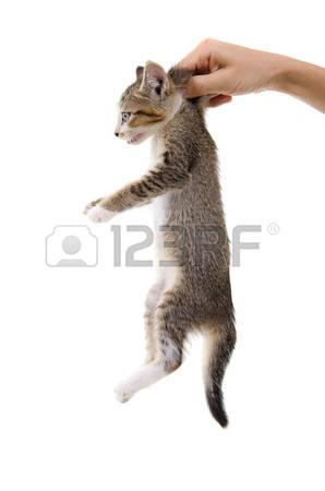 Palm kitten clipart #8
