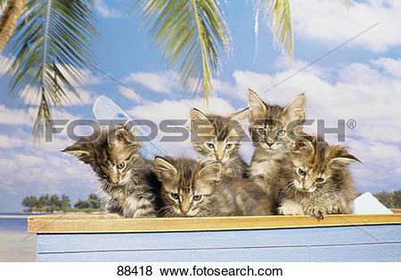 Palm kitten clipart #19