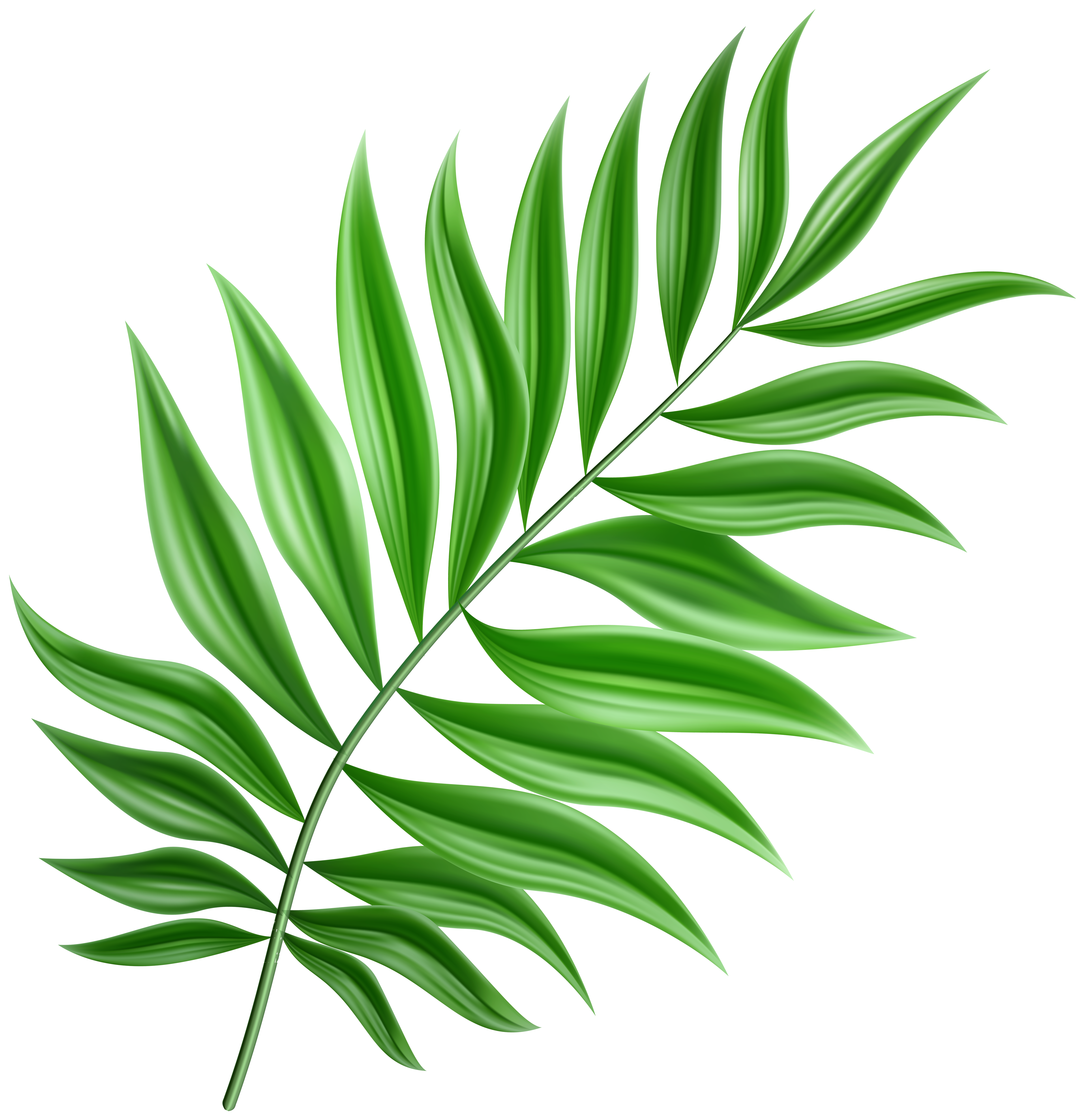 Green Palm Leaf PNG Clipart.