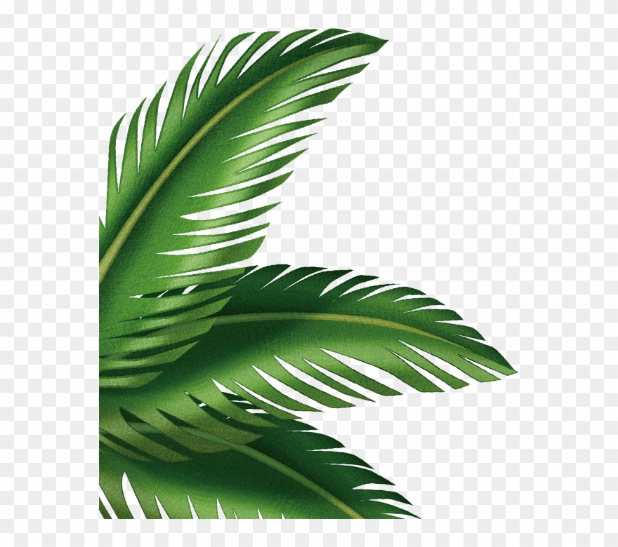 Leaf Arecaceae Clip Art Transprent Png Free.