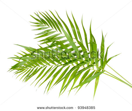 Tropical Palm Leaf Clip Art Beautiful Palm Leaves Isolated #PBjznF.